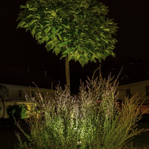 Drzewko w nyskim Dworze Biskupim