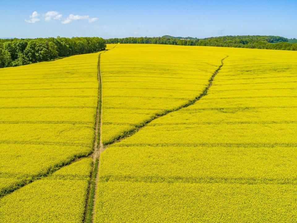 Fotografia pola rzepaku wykonana przez Fotografa z Nysy za pomocą drona