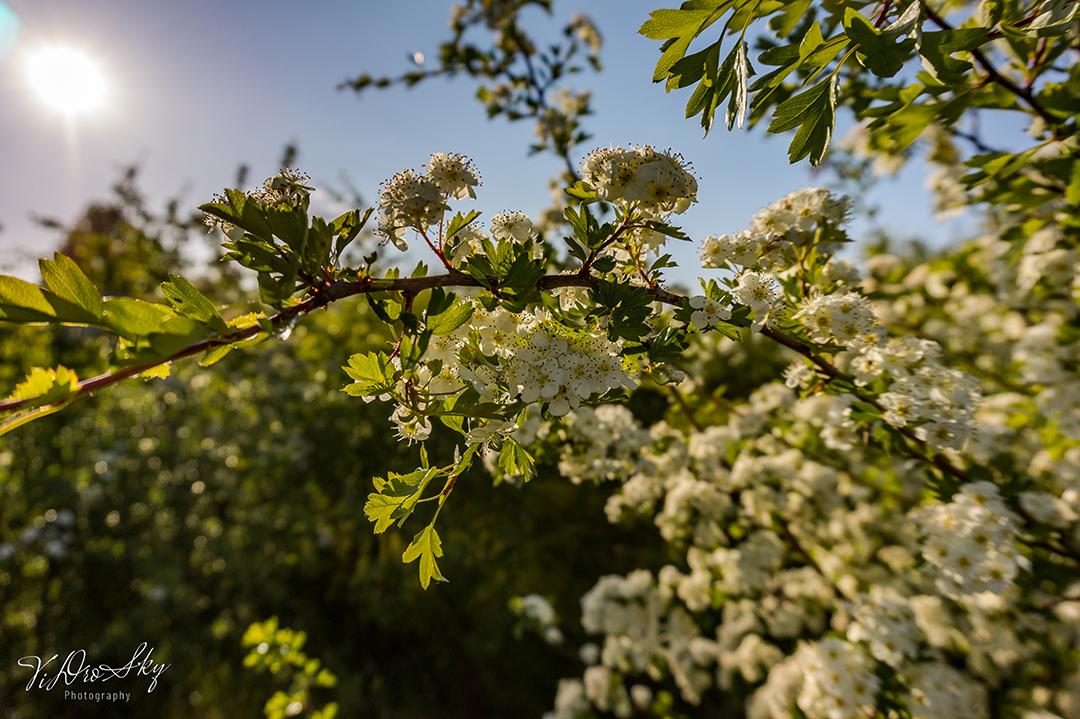 Fotografia roślinność na fortach w Nysie wykonana przez Fotografa z Nysy za pomocą drona